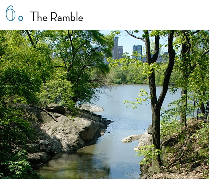 the-ramble-central-park-article