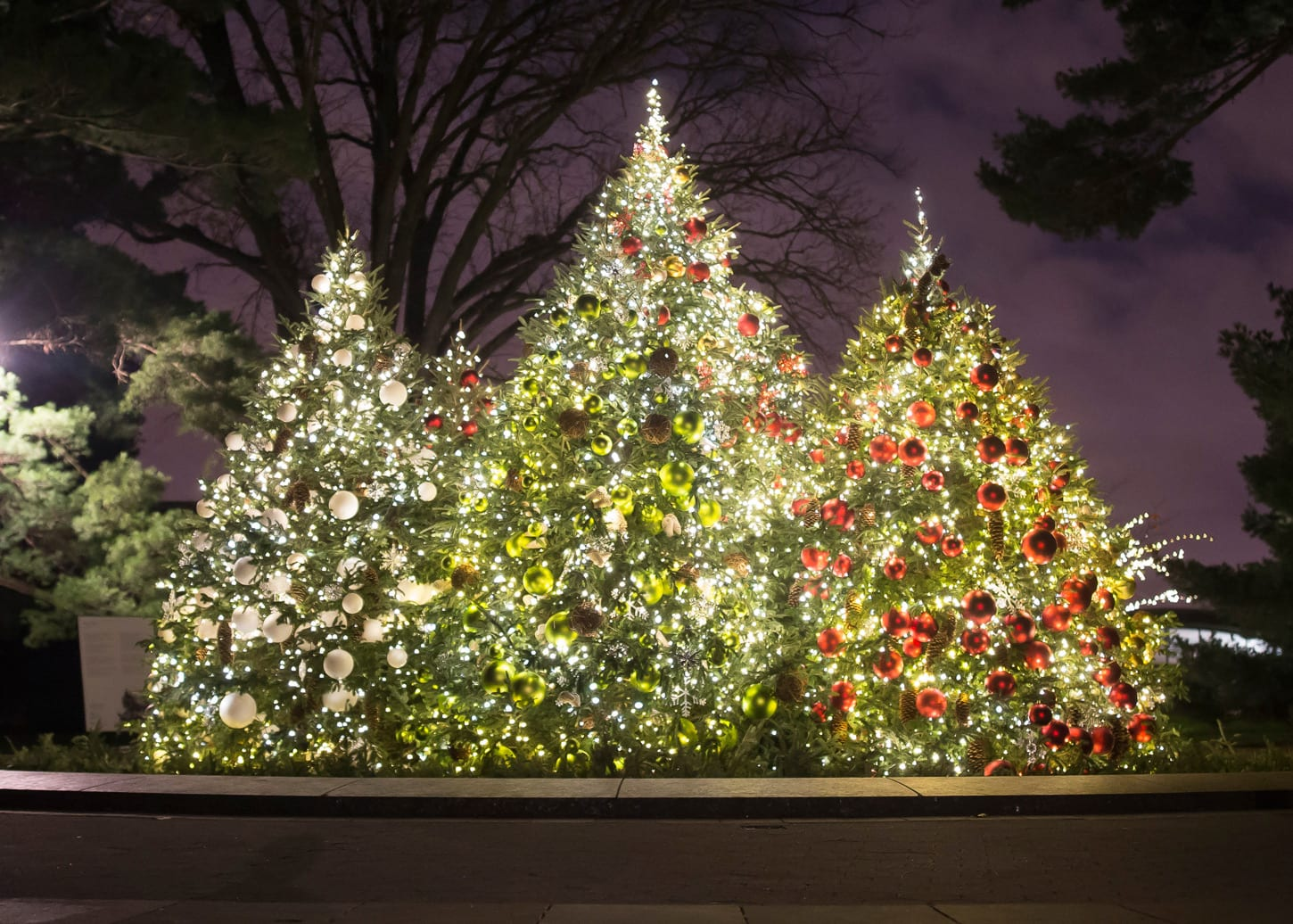 Christmas Tree In Nyc.Rockettes Favorite Christmas Trees To See In New York City